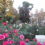 rose garden in November