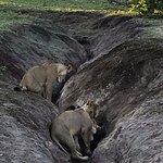 Elephant Valley Lodge 이미지