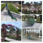 Collage Retiro
