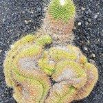 Bild från Jardin de Cactus