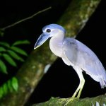 Foto de Costa Rica Jade Tours
