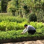 ภาพถ่ายของ Baumanière les Baux de Provence