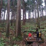 Nibunamizusawa Sugi Shokubutsu Gunraku Forest Reserve