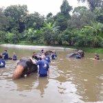 Save Elephant at Baan Chang Elephant Park