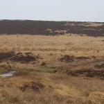 Wild walks north of Hadrian's Wall