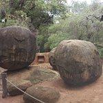 Bilde fra Perth Zoo