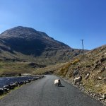 Beware of the traffic in Connemara!