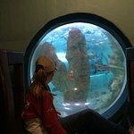 Foto de National Marine Aquarium of Namibia