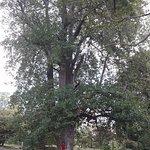 Uma das belas árvores do Palheiros!