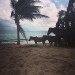 Sun Bay Beach horses