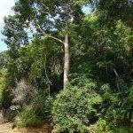 Photo of Macqueripe Bay