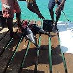Tuna - catch of the day