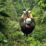 Soaring over the rain forest canopy