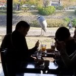 かわカフェの写真