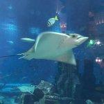 Photo of The Lost Chambers Aquarium
