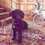 Union Gables Inn in Saratoga is pet friendly