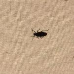 Bugs on lamp shade