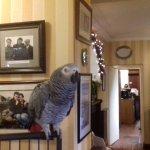 Froda the African Grey parrot!