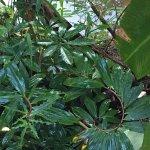 Bilde fra Piedra de Agua Palenque