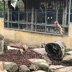 The macaque monkeys were very entertaining