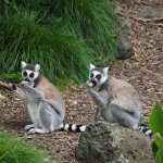 Photo de Auckland Zoo