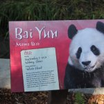 Bai Yun is the mother