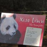 Xiao LiWu is the son of Bai Yun born in San Diego Zoo