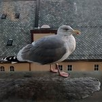 Photo of Scandic Alesund