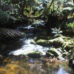Foto de St Columba Waterfall