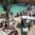 Photo of Sanccob Western Cape - Penguin Rehabilitation Center
