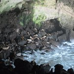 Photo of Sea Lion Caves