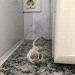 Photo de Apartamentos THe Koala Garden