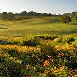 Photo: Simone Collins Landscape Architects