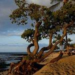 Zdjęcie Four Seasons Resort Hualalai
