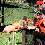 Daily Flamingo Feeding - $15 per person