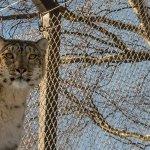 Highland Wildlife Park Foto
