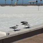 Clearwater Beach Foto