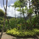 Фотография Jardin de Balata