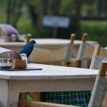 Bird on the table