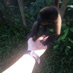 Pepito, the monkey
