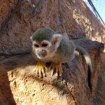 Foto de Monkey Park