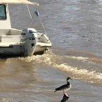 Photo of Safari Delta