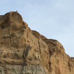 Peregrine falcon atop the cliffs. Just one of the many creatures that can be found at Torrey Pin