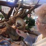 Harry the sloth enjoys his veggies