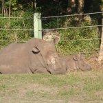White rhino mom and baby