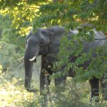 Elephant's Eye, Hwange Picture