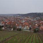 葡萄畑とヨーロッパの景色