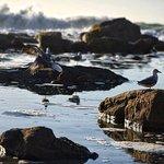 Billede af St. James Beach