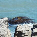 Mermaids hair seaweed at pancake rocks