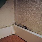 mould in the room